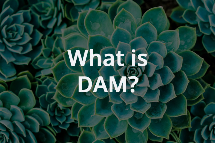 What is DAM?
